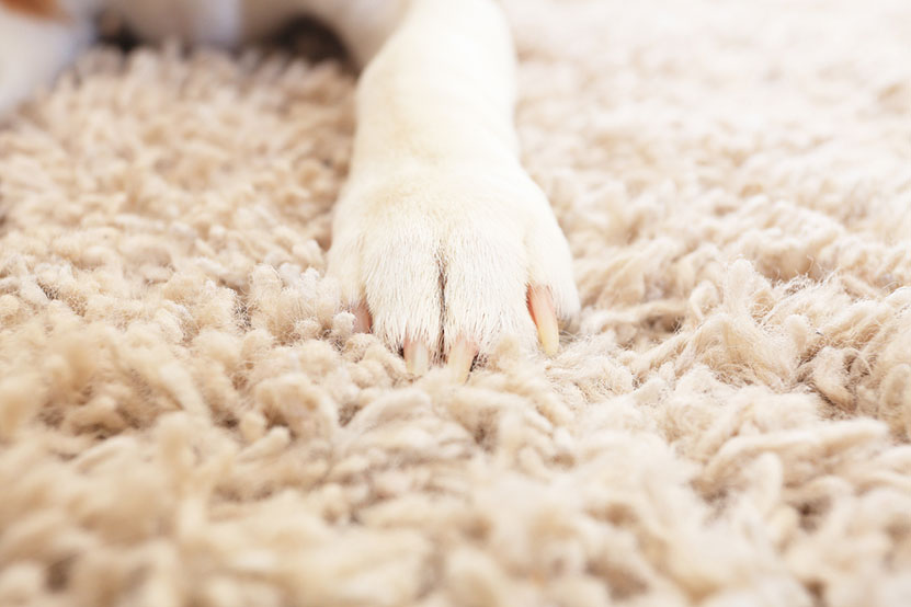 Pet Friendly Carpet Home Renovation